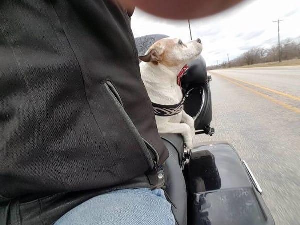 motorista salva perro maltratado 01