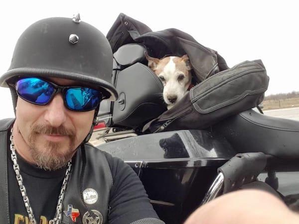 motorista salva perro maltratado 02