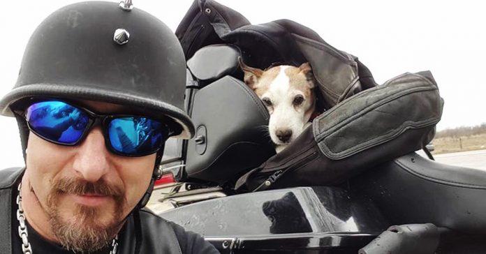 motorista salva perro maltratado banner