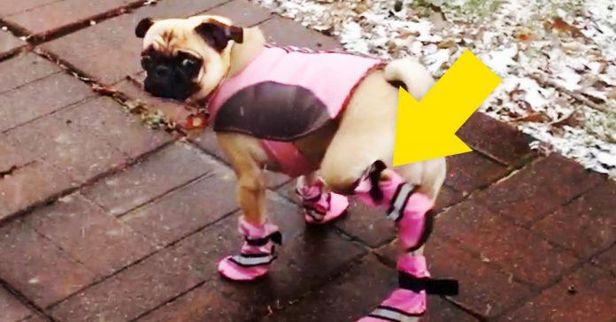 perros se prueban botas nieve invierno banner