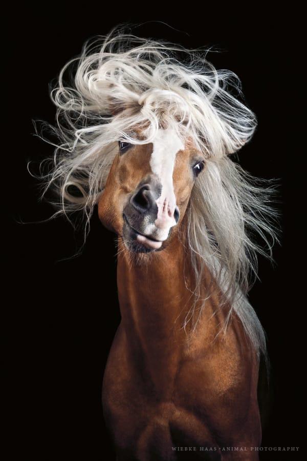 Esta Fotógrafa Captura la Increíble Belleza y Poder de los Majestuosos Caballos