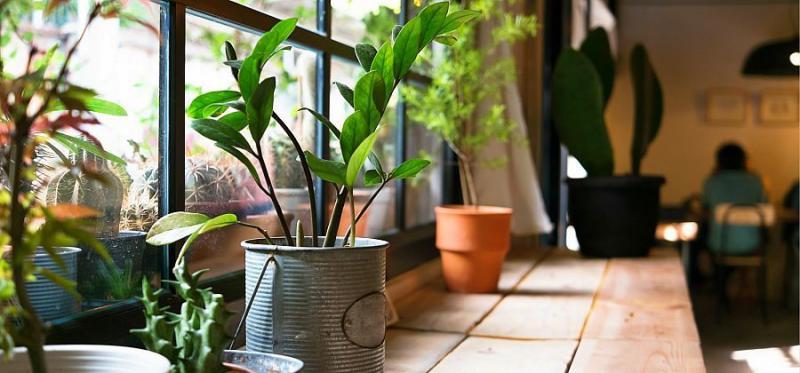 15 fantásticos trucos y usos del Agua Oxigenada