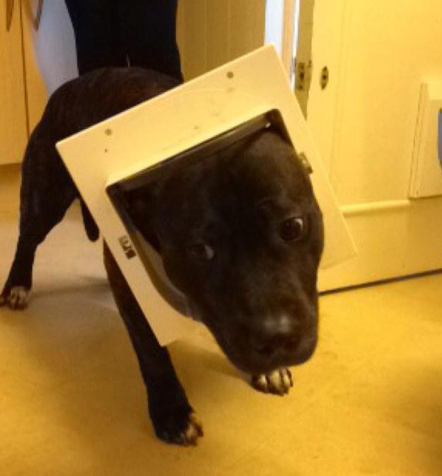 18 Divertidos Perros que se encuentran en serios problemas