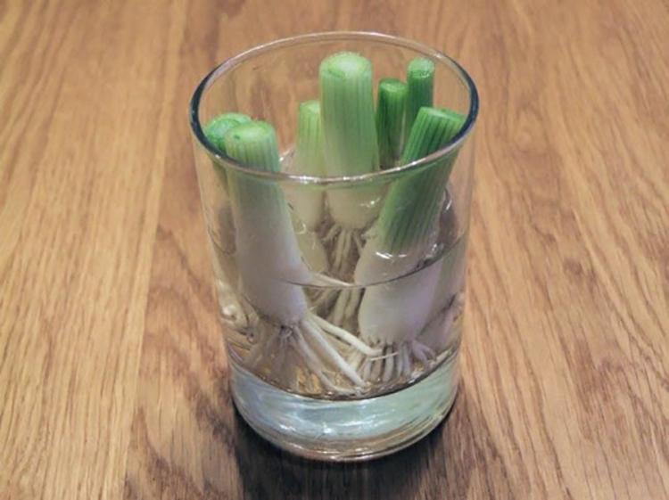 8 Verduras que Puedes comprar una vez y cultivarlas para Siempre 01