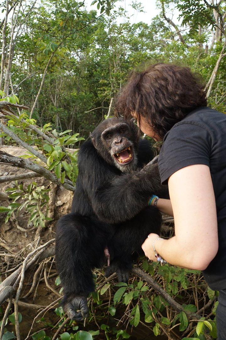 Chimpance abandonado 03