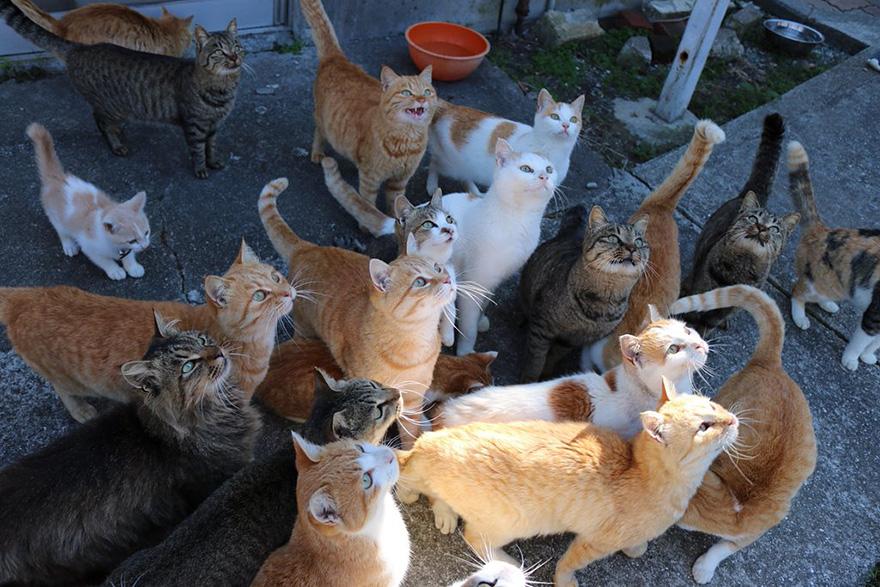Esta isla de gatos pide comida en internet , ¡reciben más de lo que pueden almacenar!