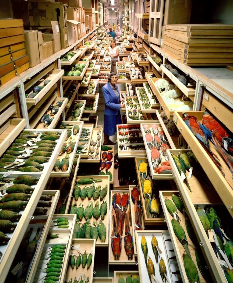 Hay miles de cajones en el almacén secreto del Smithsonian. Lo que hay dentro es Increíble