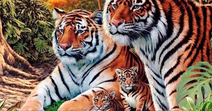 Pocas personas son capaces de encontrar a todos los Tigres de Esta Imagen banner