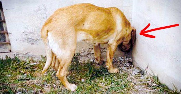 Si ves a tu Perro o Gato haciendo esto llevalo inmediatamente al Veterinario banner