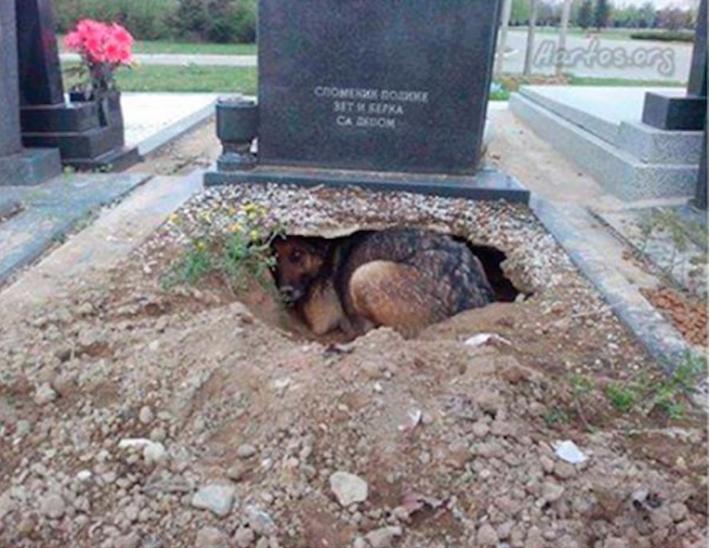 Todos pensaban que el perro lloraba la perdida de su dueno cuando descubrieron la verdad 01