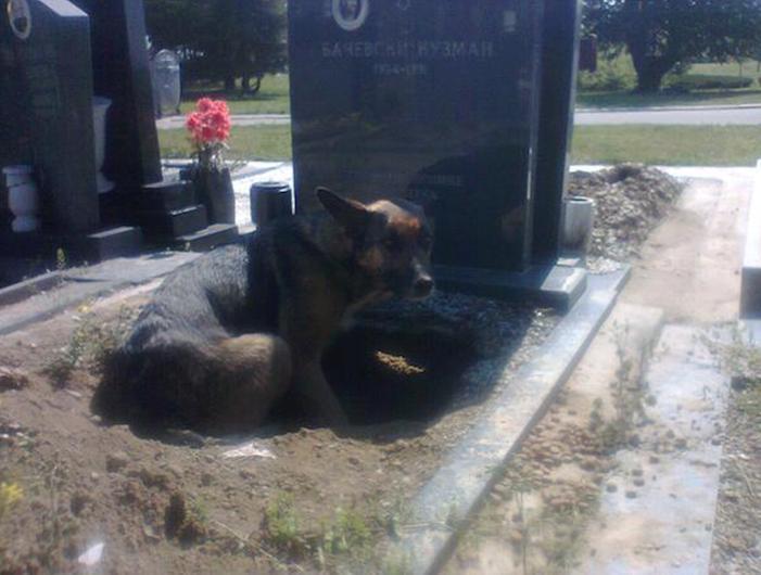 Todos pensaban que el perro lloraba la perdida de su dueno cuando descubrieron la verdad 02