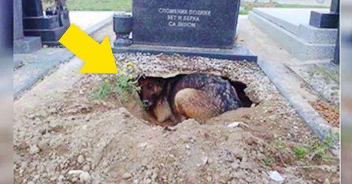 Todos pensaban que el perro lloraba la perdida de su dueno cuando descubrieron la verdad banner