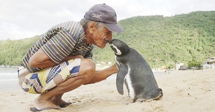pinguino viaja 8000 km para reencontrarse salvador banner