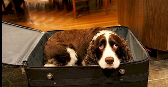 17 Adorables mascotas que NO quieren que te vayas de viaje 01