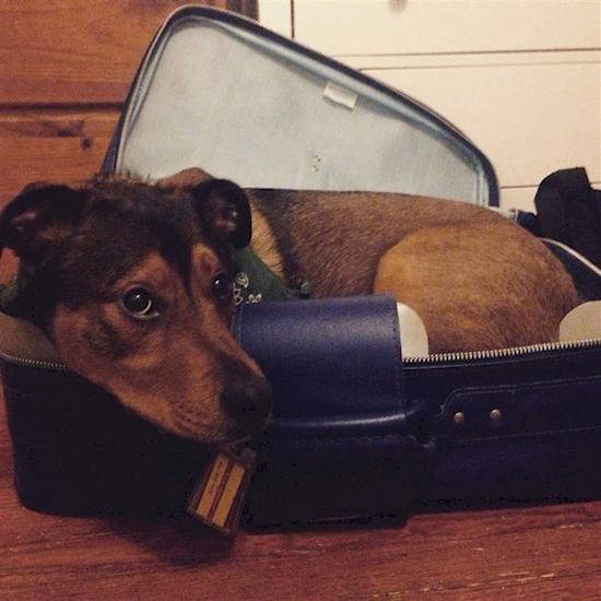 17 Adorables mascotas que NO quieren que te vayas de viaje 03