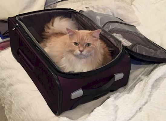17 Adorables mascotas que NO quieren que te vayas de viaje 04