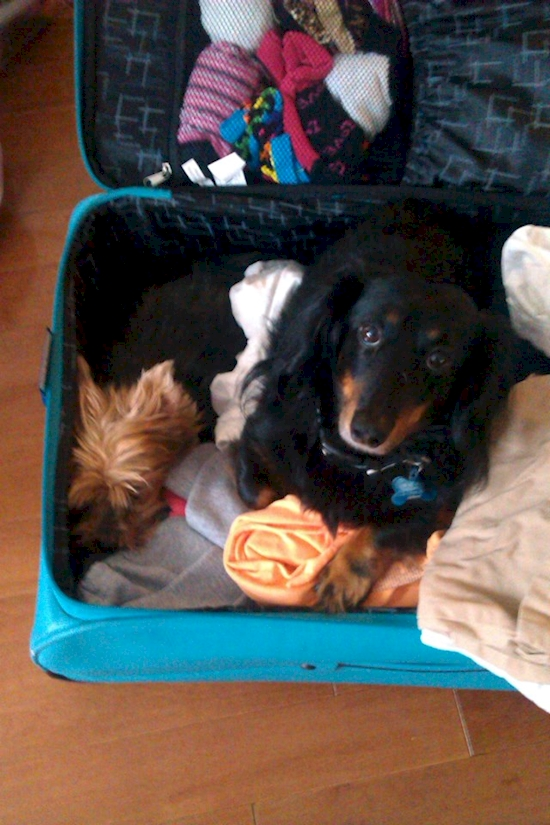 17 Adorables mascotas que NO quieren que te vayas de viaje 05