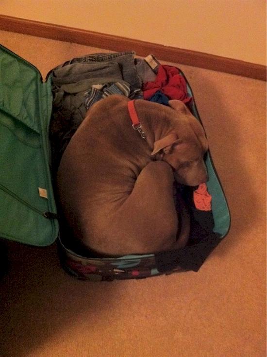 17 Adorables mascotas que NO quieren que te vayas de viaje 06