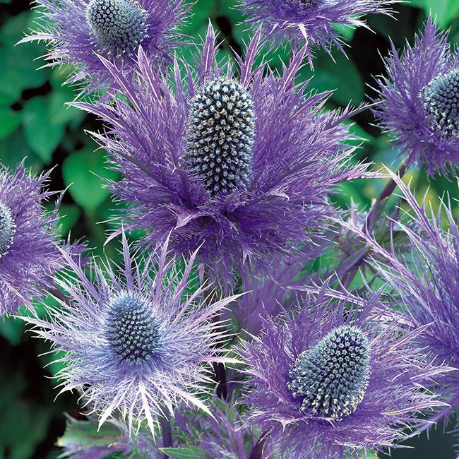 Las 20 Plantas más raras y extremadamente bellas del Planeta