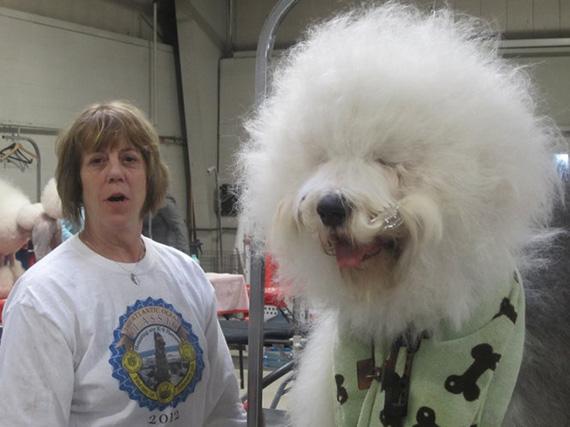 20 Gigantescos y peludos Perros que querrás adoptar Inmediatamente