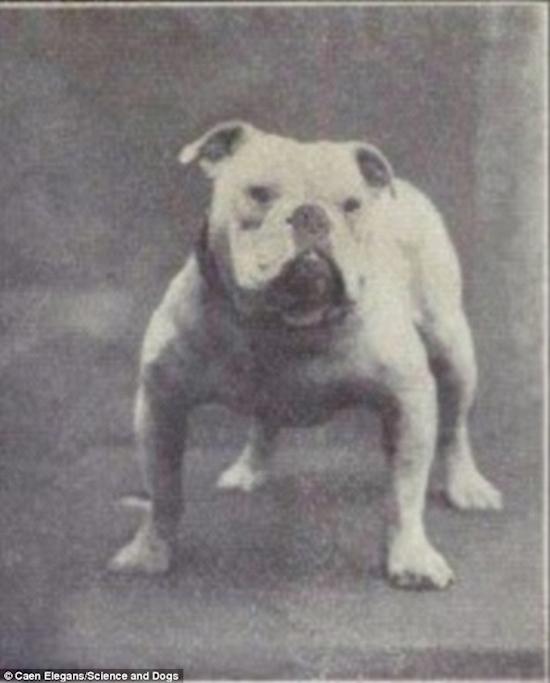 500 Asi eran los Perros hace mas de 100 anos 13