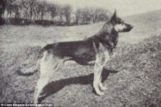 500 Asi eran los Perros hace mas de 100 anos 15
