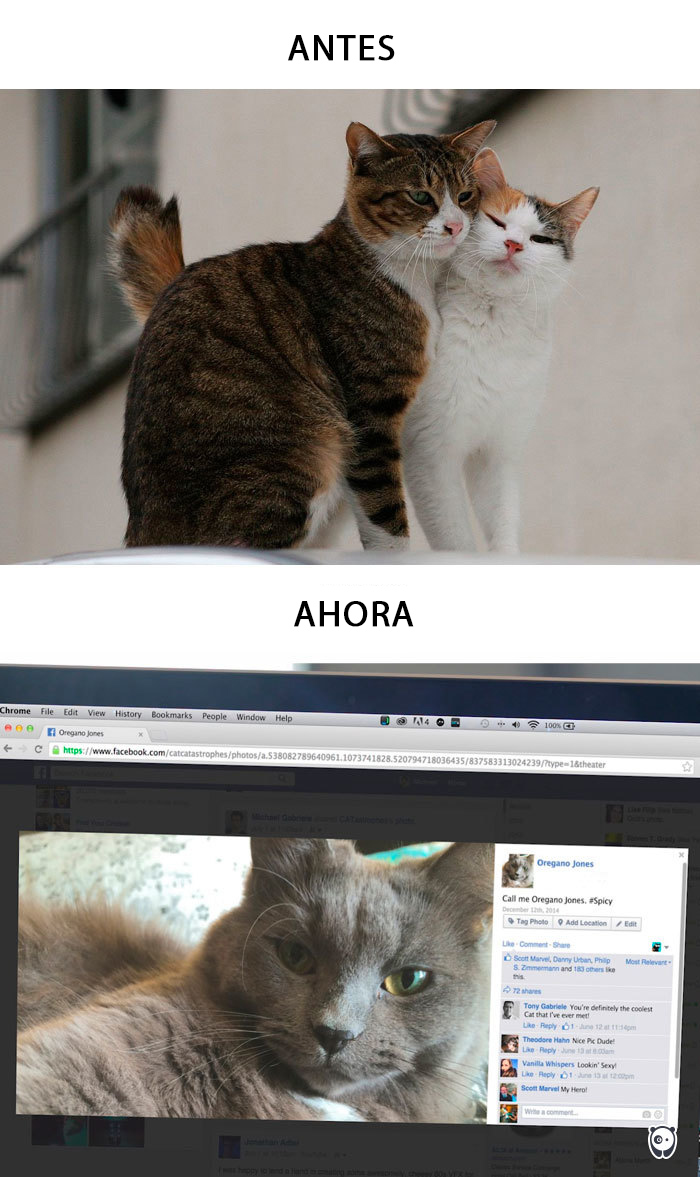 Descubre como la tecnologia ha cambiado la vida de nuestras mascotas 09 copy