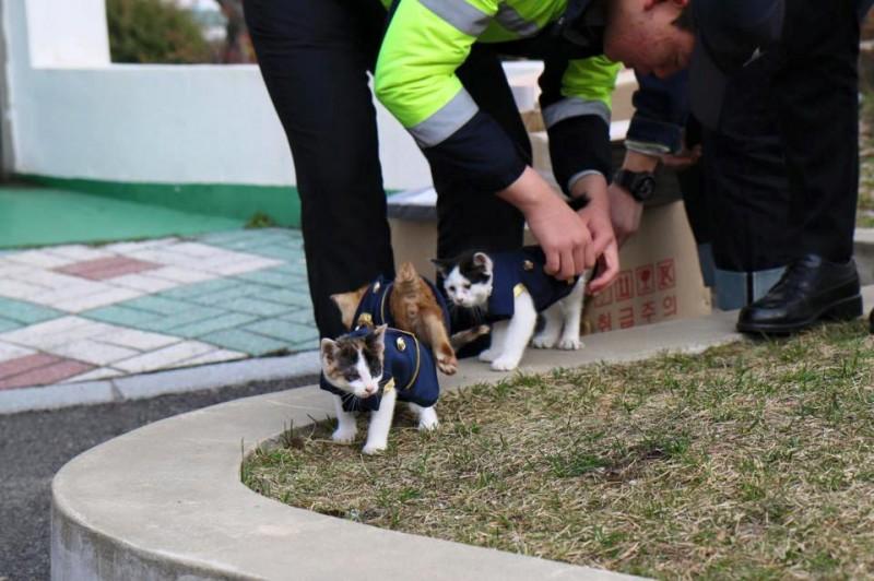 Estos policías vieron a un gato acercarse varias veces. Pero nunca imaginaron lo que iba a acabar trayendo...