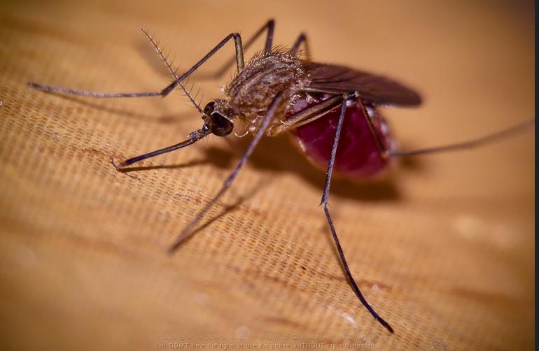 3 Razones por las que siempre te suelen picar a ti los mosquitos