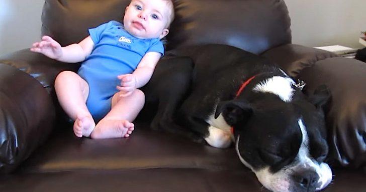 Un pobre Perro sufre las consecuencias después de hacerse caca su bebé