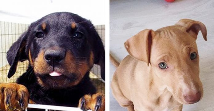 17 razas de perros que no sabias que existian y que vas a querer inmediatamente banner