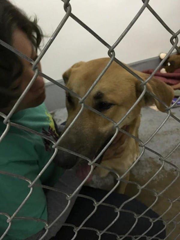 Kings SPCA-Rescue