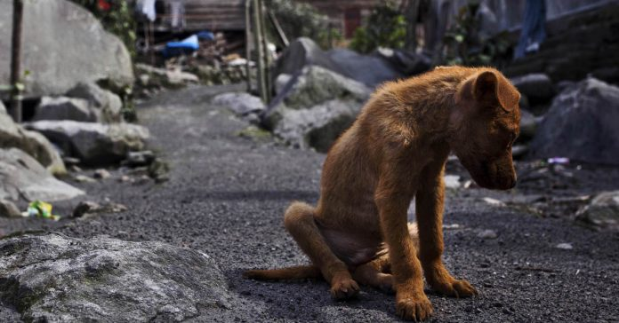 Carta dirigida a todos aquellos que abandonan sus perros se hace viral banner