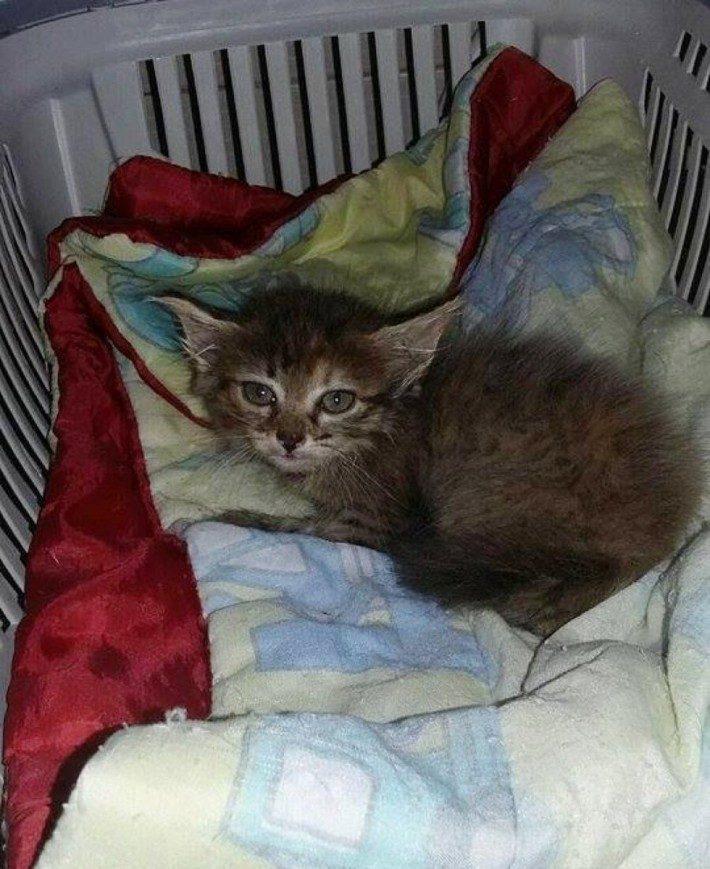 Encontró a un gatito abandonado en el cubo de la basura, y lo que hizo después te hará llorar