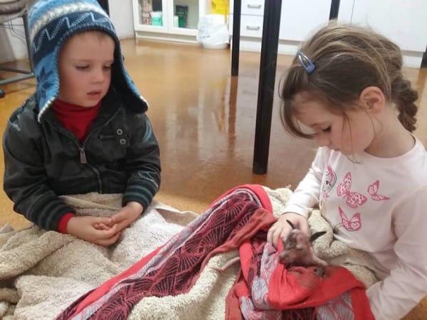 Se encontró una madre canguro sin vida en la carretera. Pero lo que encontró cuando se acercó fue un pequeño milagro...