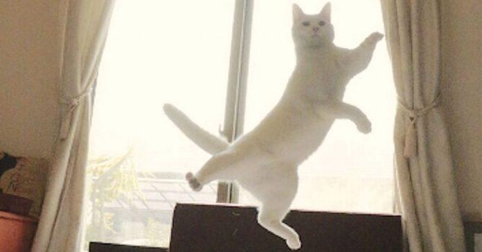 Este Gatito dio un gigantesco salto Pero cuando veas sus otros movimientos banner