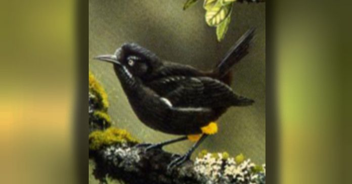 Este Increible ave se ha extinguido banner
