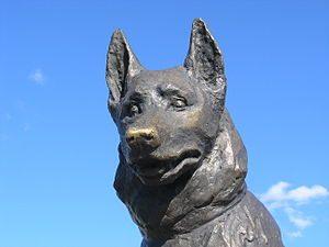 Este Perro callejero espero en el mismo lugar durante 7 anos 04