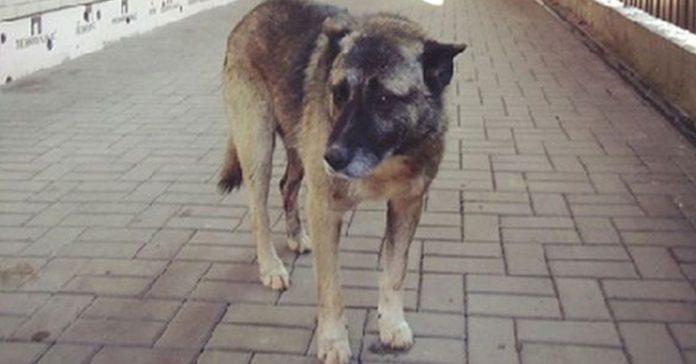 Este Perro callejero espero en el mismo lugar durante 7 anos banner