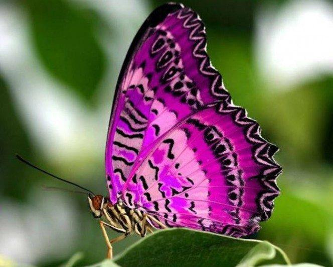 Hay algo sobre las mariposas que la mayoría de personas desconoce. Y es realmente espeluznante
