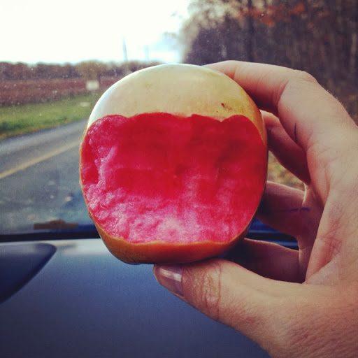 ¿Conocías las increíbles Manzanas rosa perla?