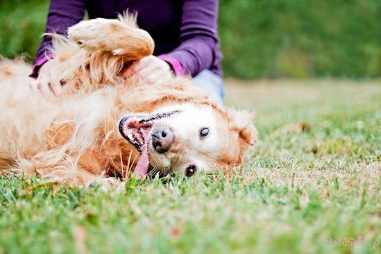 5 Cosas que ocurren al dejar que un perro te lama la cara