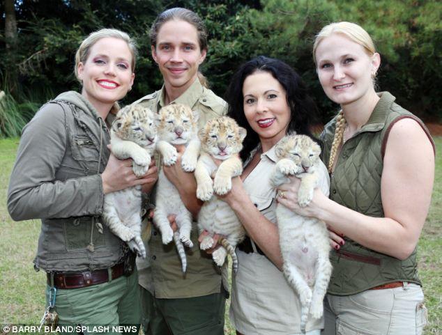 Un Leon blanco y una tigresa tuvieron bebes 05