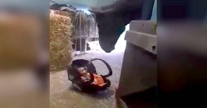 este caballo balancea a un bebe que esta en su sillita