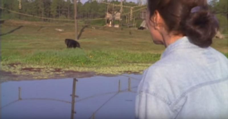 Los chimpancés nunca olvidaron lo que esta mujer hizo... Se volvieron a ver después de 18 años
