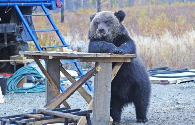 12 divertidos osos que pretendían ser verdaderos humanos