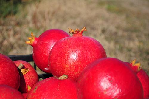 Pomegranate oil photo