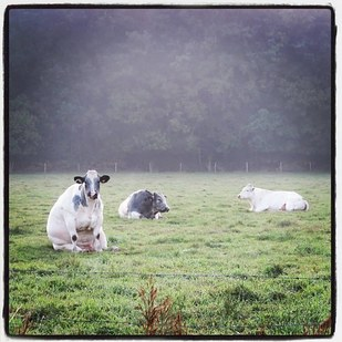 9 vacas como nunca antes las habías visto