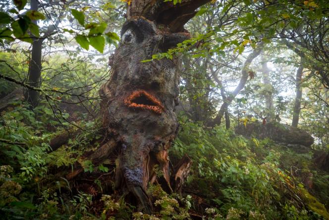 Descubrieron un extrano lugar del Mago de Oz 11