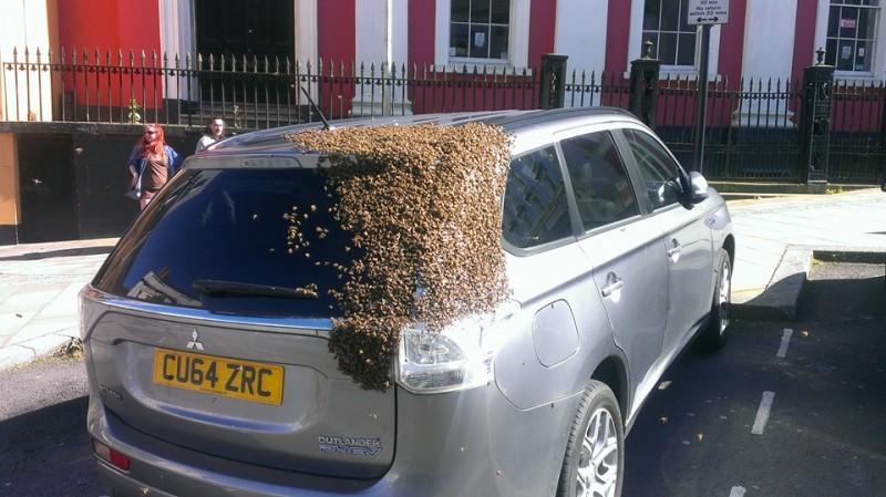 Durante dos dias este enjambre de abejas estuvo atacando su coche 02